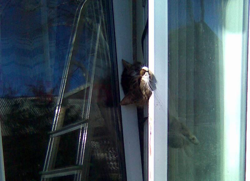 ведут коты в окне застряли видео мастер-класс вязанию