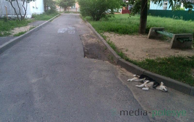 Результат работы снайперов. 2 июня. Утро во дворе дома №9 по ул.50 лет Октября