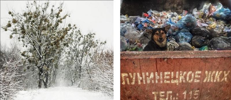 #медиаполесье #mediapolesye #собаки #отстрел #защитаживотных