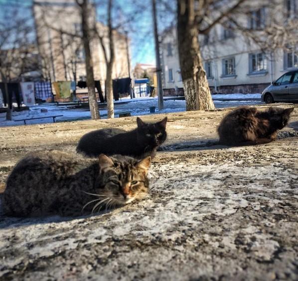 #belarus #spring #cats #беларусь #лунинец #животные #animals