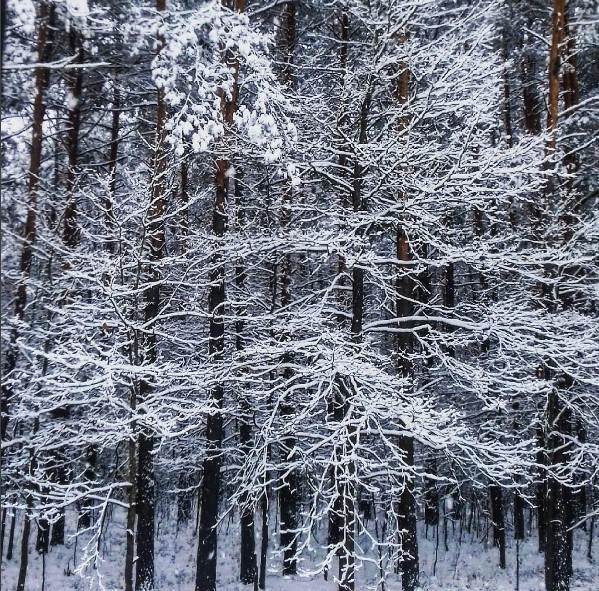 #mediapolesye #медиаполесье #красотень #природа #зима #снег #кайф #belarus #snowing #forest
