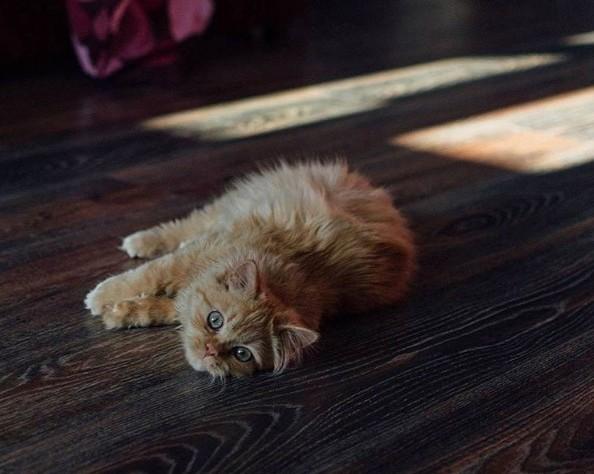 #sweethome #pinsk #palesse #пiнск #котики #животные #animals #cat