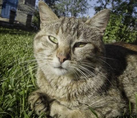 #cat #animals #nature #pinsk #stolin #luninets #кот