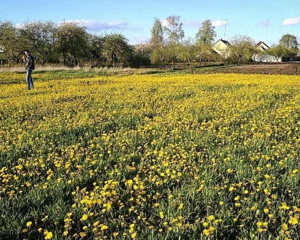 #маякраiнабеларусь #mediapolesye #Belarus #goodnight #sweetsleep #nature #flowers
