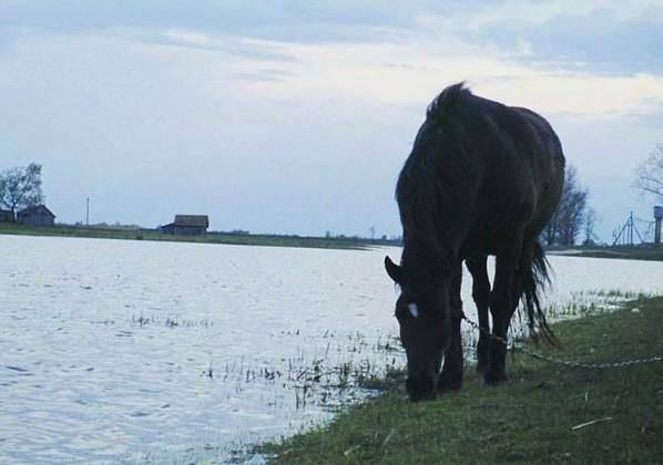 #Velemichi #mediapolesye #polesye  #horse #lake #walking