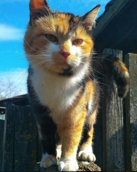 Трехцветная кошка подписчикам на удачу от @du_mus