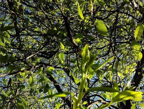 #mediapolesye #медиаполесье #green #forest #belinstagram #pinsk #stolin