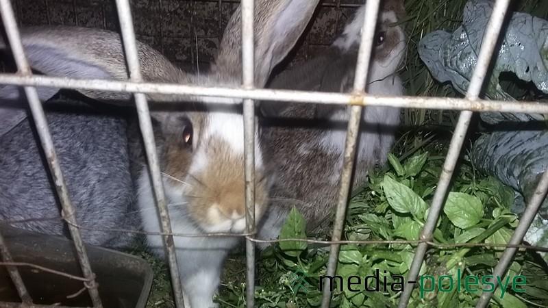 Из «мяса» в хозяйстве остались только кролики