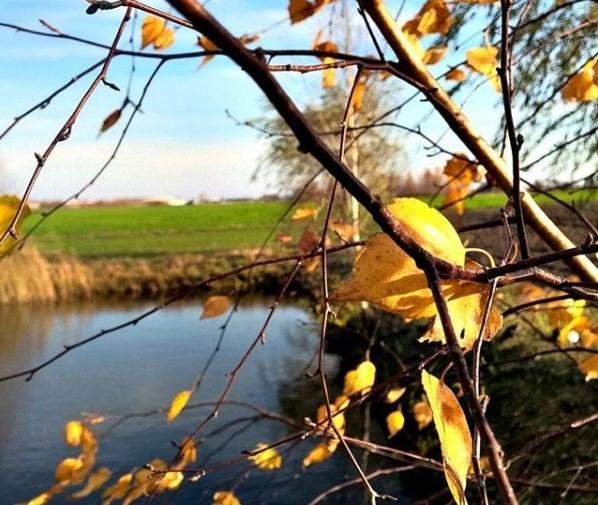 #осень #природа  #листья #деревья #nature #sky #belarus #mediapolesye