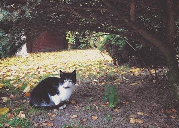 #котик #кот #осень #пинск #беларусь #mediapolesye