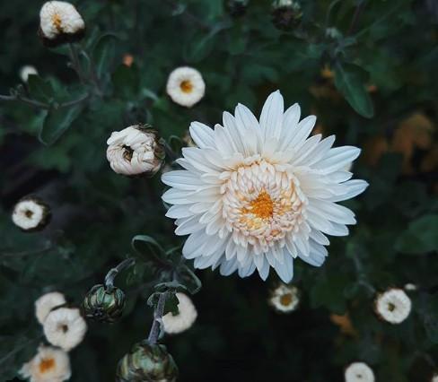 #цветы #природа #беларусь #красота #прекрасное #flowers #nature