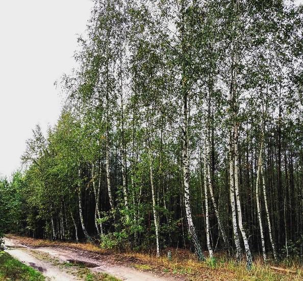 tainy_poklonnik пишет, что наши леса ещё и - Грибные леса!