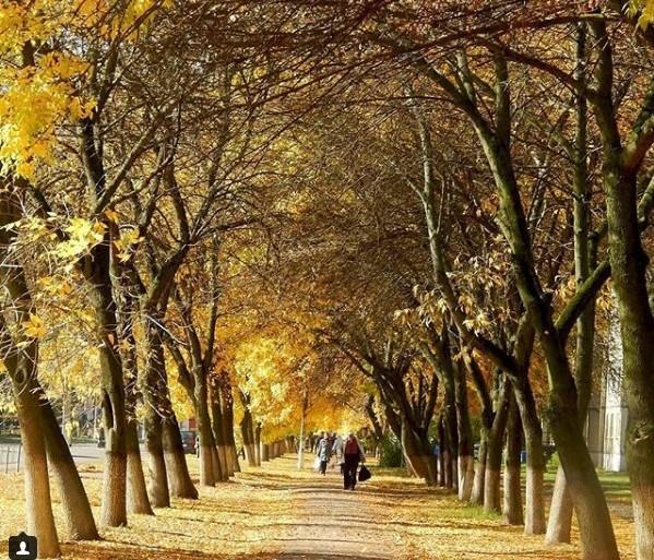 #осень #аллея #деревья #листья #краскиосени