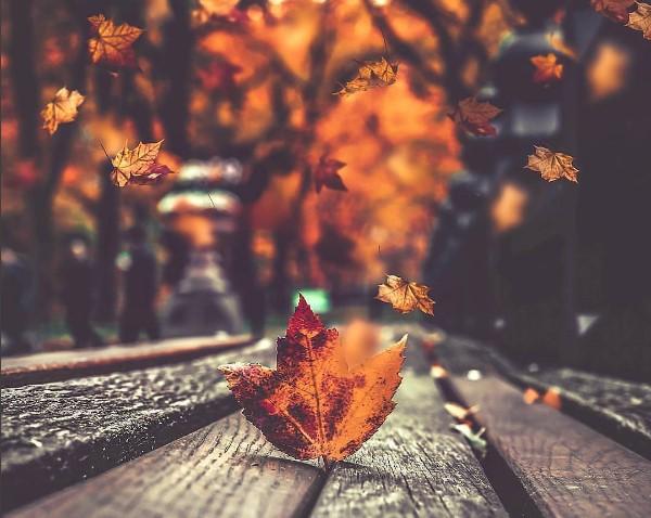 #листья #осень #макро #макросъемка #оранжевый #autumn #autumnleaves