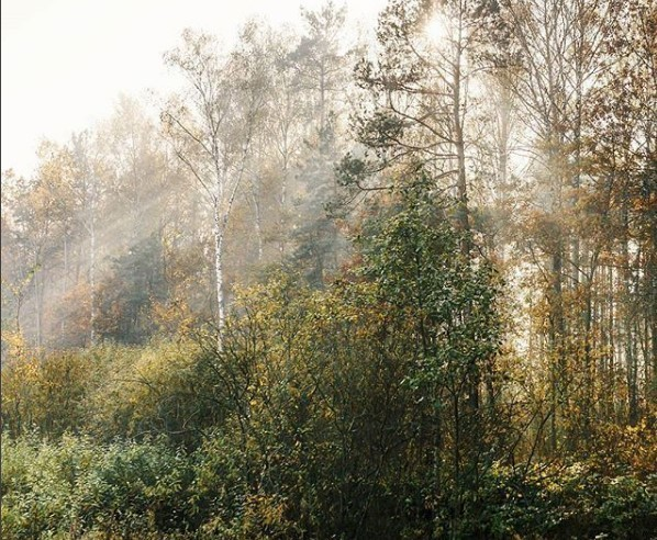 #лес #природа #лучи #утро #солнце #nature #lights #morning #mediapolesye
