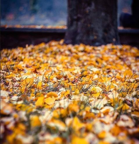 #листья #осеньвгороде #осень #земля #nature #belarus #pinsk #mediapolesye