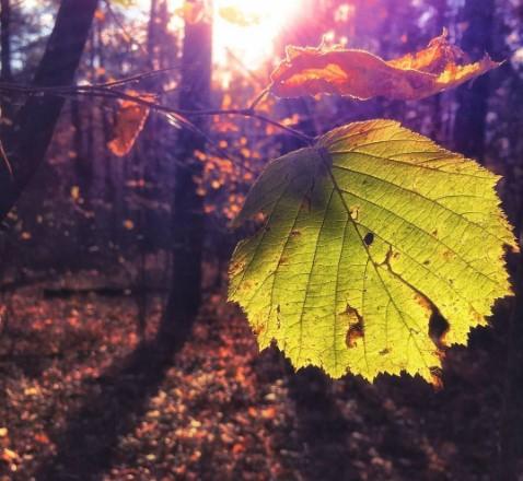 #солнце #лес #осень #листья #природа #беларусь #sun #forest #leaves #autumn