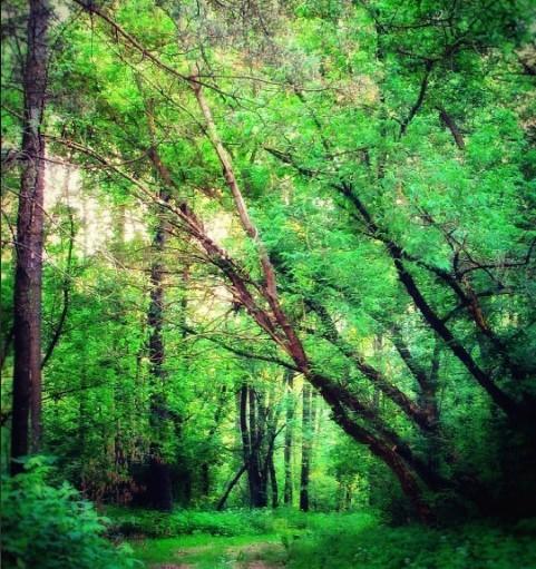#лес #природа #влесу #зелень #лето #деревья #тропа #forest #nature