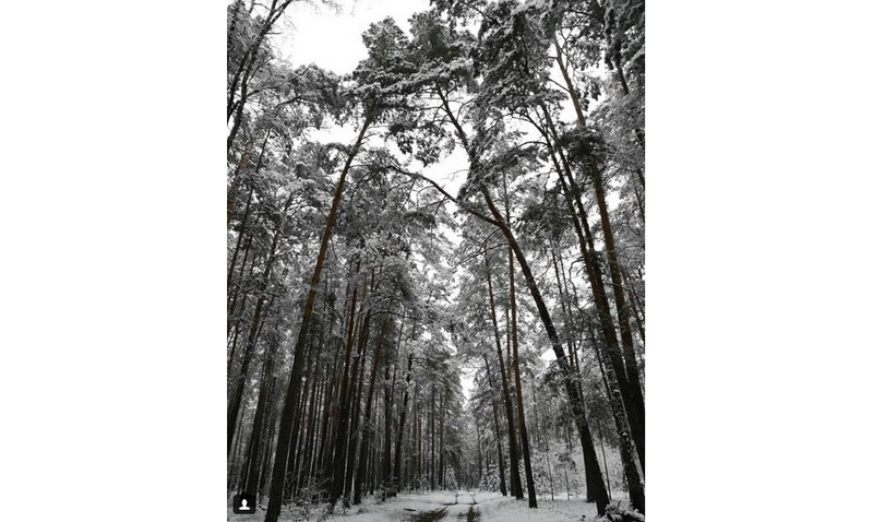 #forest #winter #snow #trees #road #intothewild #nature #belarus #luninets