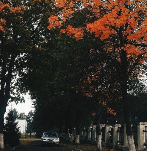 #осень #краскиосени #деревья #природа #беларусь #микашевичи #лунинец #пинск