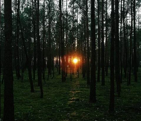 #закат #солнце #лес #природа #полесье