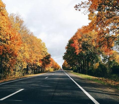 #осень #дорога #солнечныйдень #листья #природа #поездка #autumn #autumnleaves