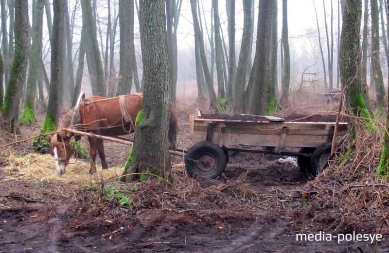 Фото предоставлено Столинской межрайинспекцией охраны животного и растительного мира