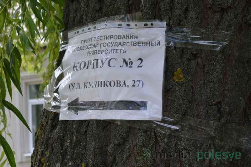 Импровизированные указатели висят на деревьях, чтобы абитуриенты не заблудились