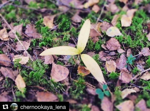#wood #forest #coloursofnature #nature #naturelovers