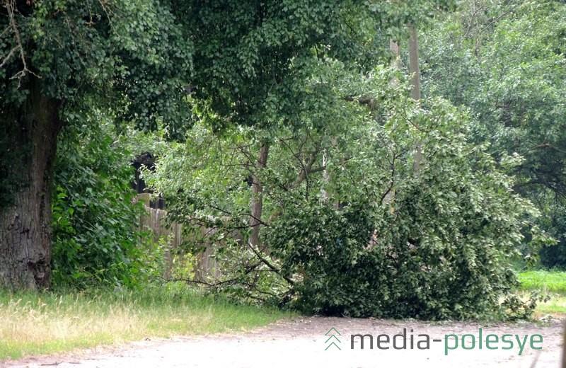 Ночная буря повалила мелкие деревья и оборвала ветви на больших