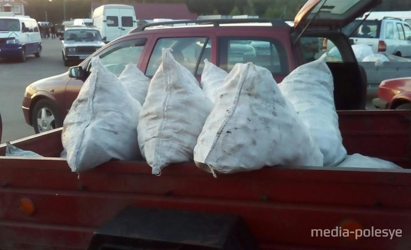 В прицепах, багажниках, в кузове везут мешки с огурцами на сдачу