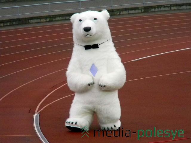 Несколько белых медведей пытались заводить публику