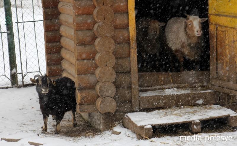 Животных из пинского зооуголка передали в зоопарк в Гродно
