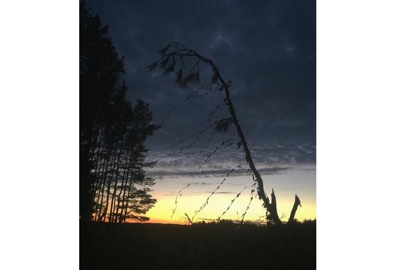 #nature #belarus #palesse #mediapolesye #sun #sunset #forest #sky #orange #black #night #nice #медиаполесье #ilovemyjob