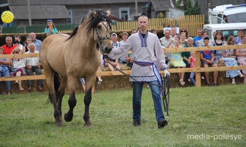 Выводка племенных лошадей ОАО «Полесская нива»