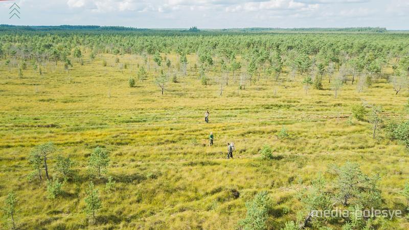 Ольманские болота. Фото И. Муравьёва