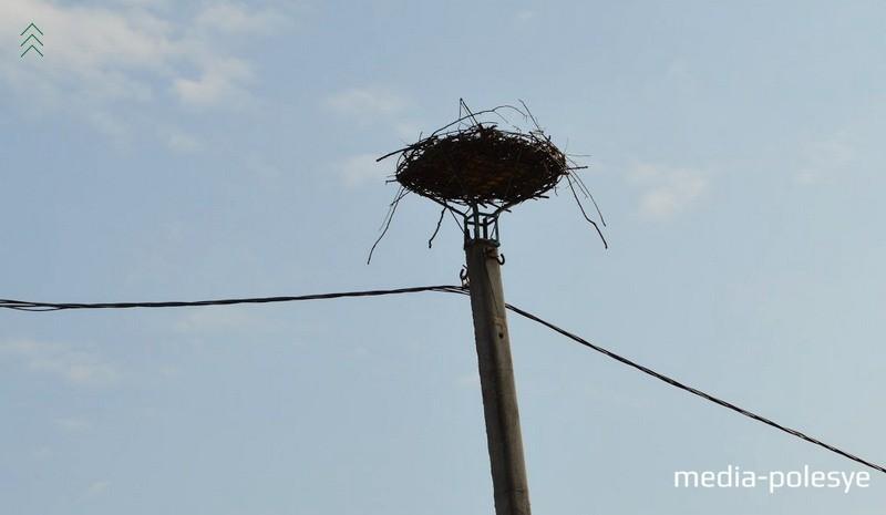 Один из столбов, на который установили специальную платформу для птиц в Вульке-1