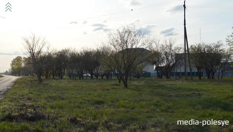 Убрали лишнюю растительность в центре деревни