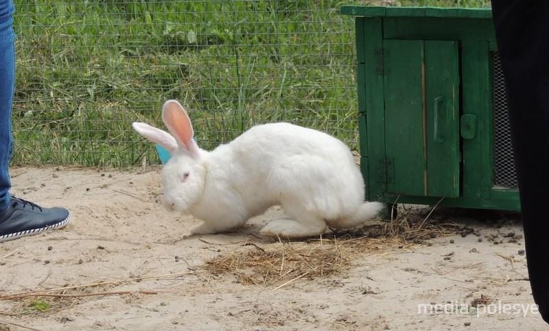 Около Центра находится вольер с кроликами. Туда тоже можно зайти и покормить его жителей