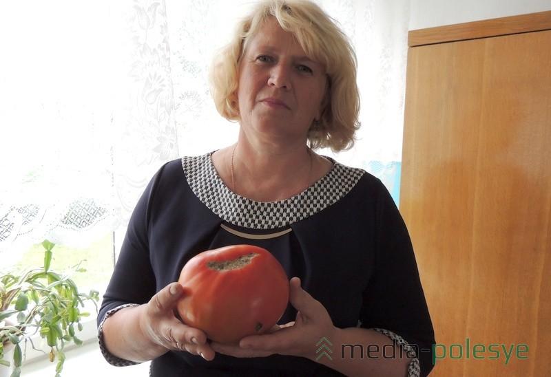 Людмила Александровна Самойлович говорит, что такие помидоры тяжело снимать с куста, не повредив плоды