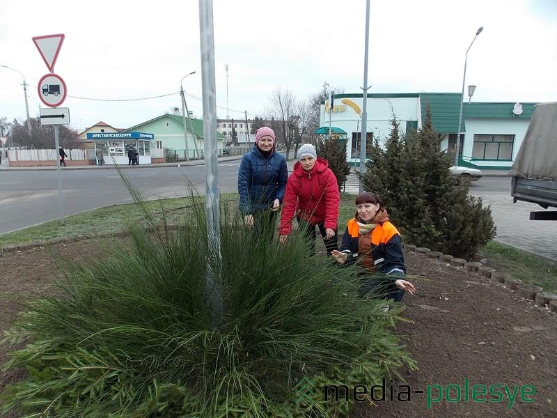 Зимняя клумба на перекрёстке улиц 50 лет Октября и Красной