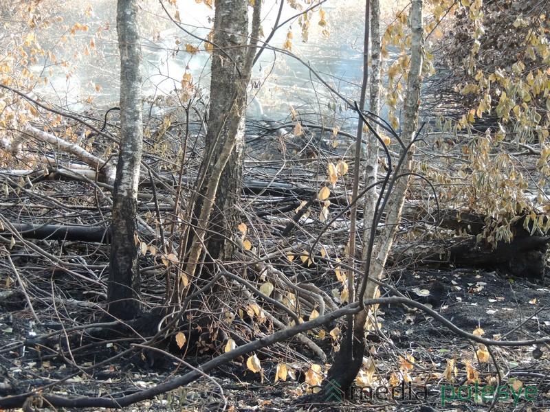 Лесной пожар наносит большой вред природе