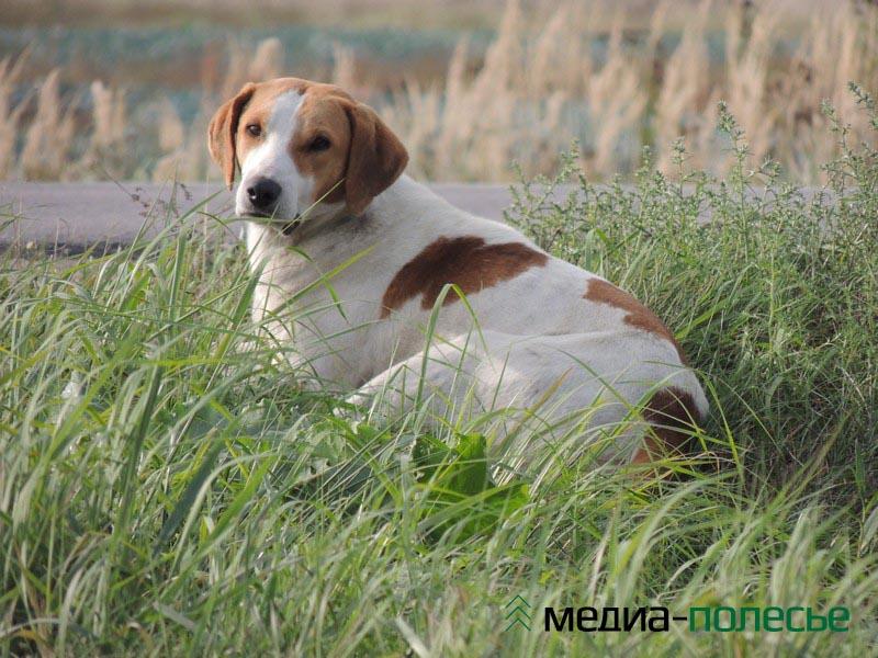 Собаки у фермера красивые. А главное в том, что они настоящие сторожа