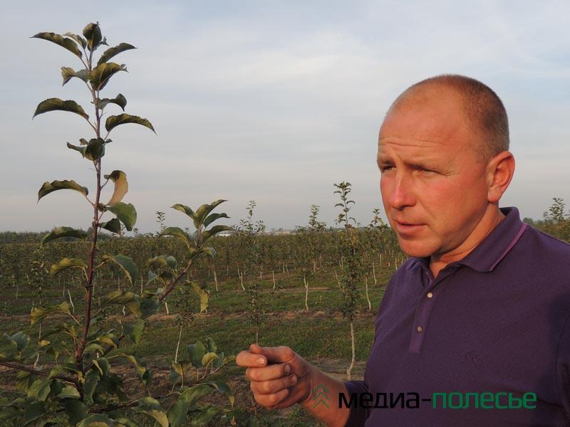Чтобы сад давал хороший урожай, за ним надо очень хорошо ухаживать