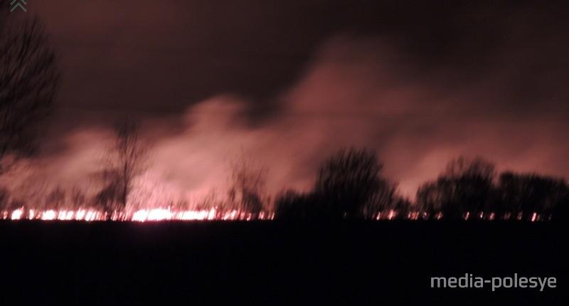 Лесные пожары приносят огромный вред природе