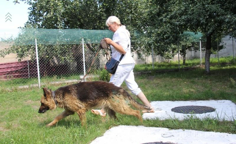 Собака с удовольствием бегает по траве