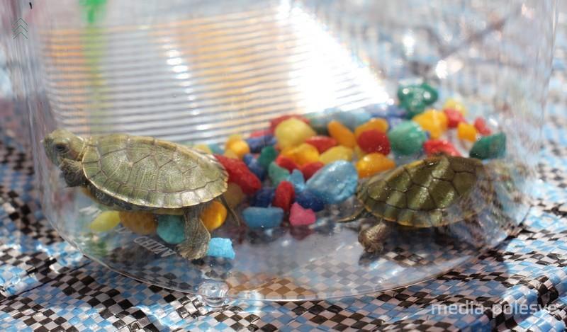 В контейнере пластиковая пальма и разноцветные камешки
