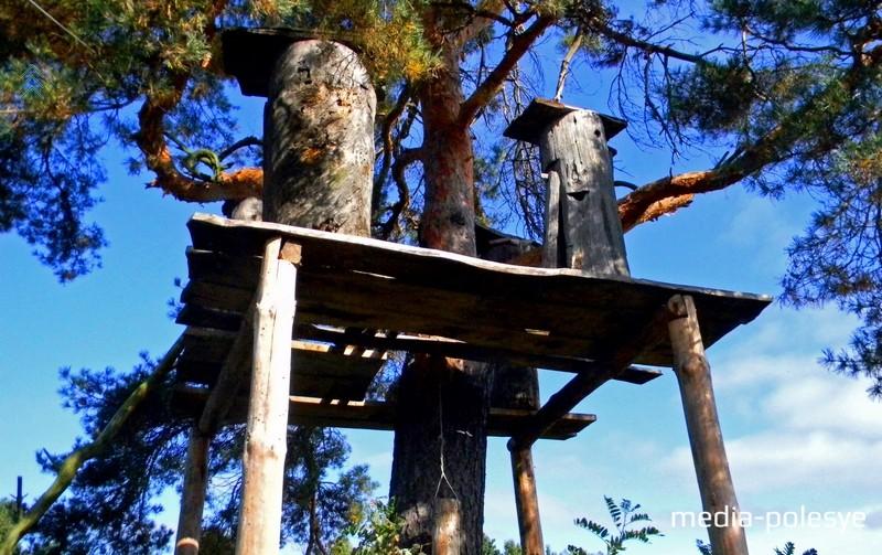 Площадка среди деревьев с установленными на ней бортями
