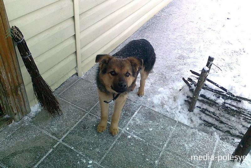 Приветливая собачка встречает покупателей из Беларуси