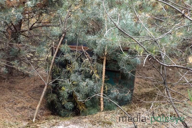 Бочки были прикрыты сосновыми ветками. Все фото предоставлены Столинским РОВД